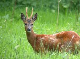 Bambi Antlers and Baseball