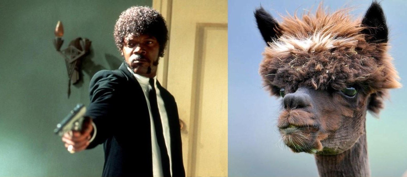Sam Jackson the legend, the man, the llama.