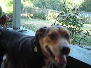 The Frankie Project – Admitting my Dog Needs Therapy