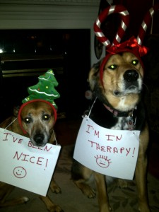 Even Dogs Need Therapy
