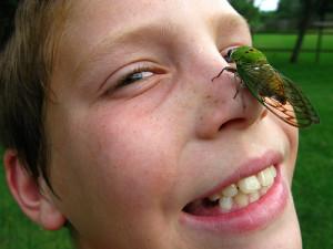 Sex Crazed Cicadas are Coming our Way