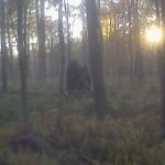 Bigfoot Hoax in Pennsylvania