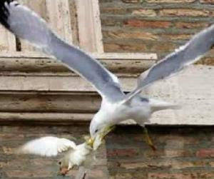 Pope's Doves Attacked
