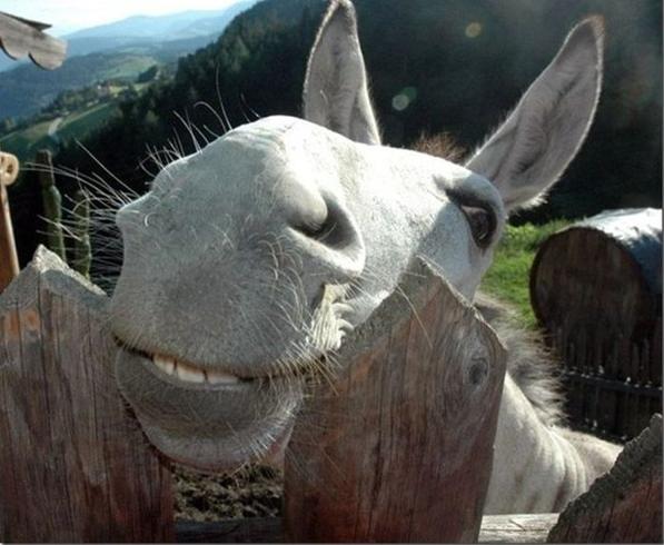 Donkey Cute