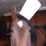 Women + Horses = Epicurean Delight