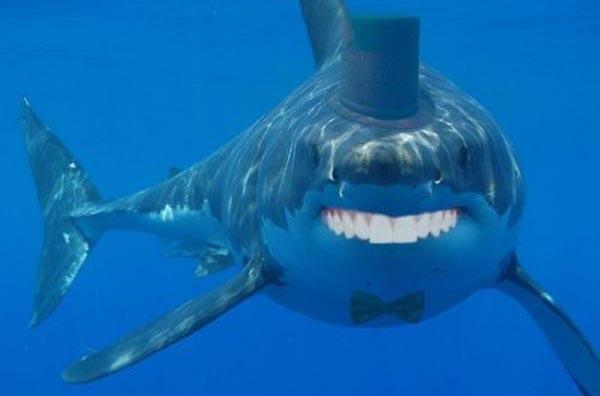 Sharks with human teeth - photo#23