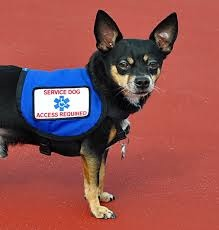 Why We Need Alcohol Sniffing Dogs