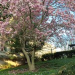 This tree is out to get you!