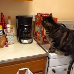 Cat, you don't drink coffee, so GET DOWN!