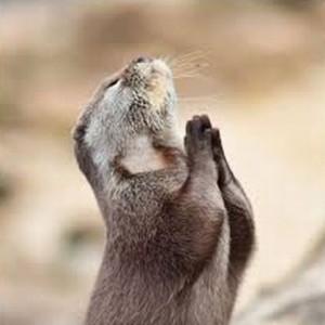 Otter_in_prayer