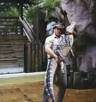 alligator-wrestler-729451__180