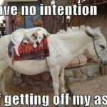 nointention