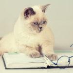 Cute Cat Picture