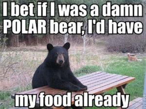 Semi-Humorous Real Life Bear Encounters Of The Too Close Kind