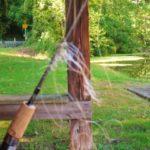line-birds-nest
