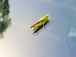 bug-on-windshield