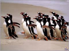 Image result for penguins running