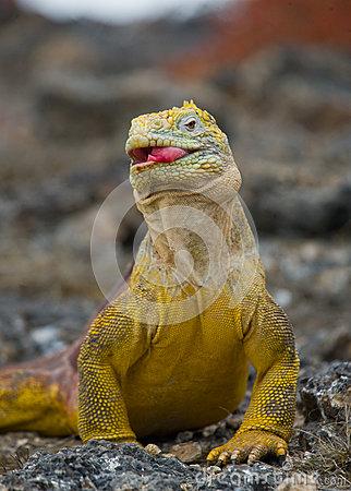 Galapagos Island Dream Vacation?