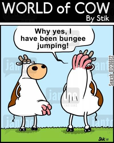 'Why yes, I have been bungee jumping!'