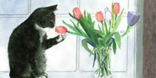 Poetry for Cats