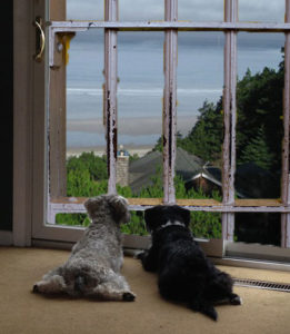 <strong>Wary dogs view a stay in a luxury kennel as just crate training at a Sandals Resort.</strong>