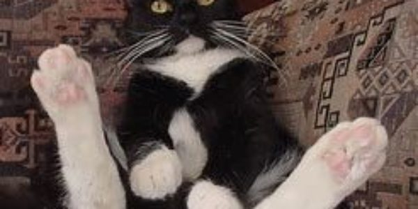 My Cat, Unregistered Investment Advisor